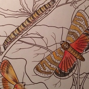 "Day 36: Detail from ""Coloring Butterflies"" (Arcturus)"