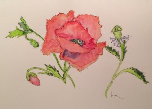 Day 90: Poppy watercolor